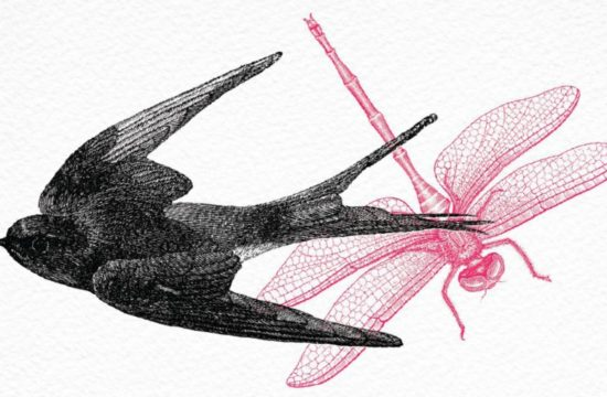 Bird and dragonfly graphic