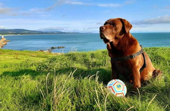 A dog poses with a special ball made for children without sight.