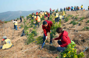 Lions Clubs planting trees