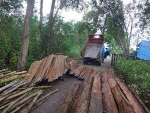Truck depositing wood for scaffolding to support mangroves